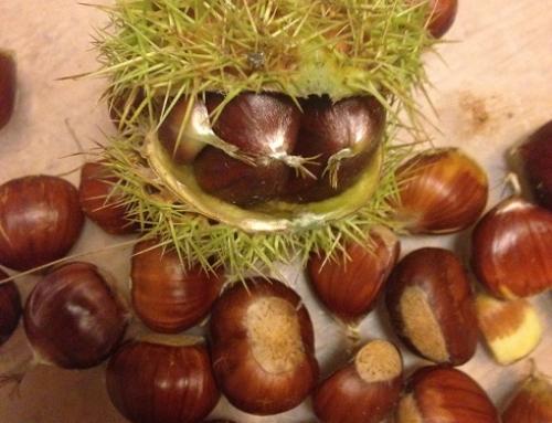 Herfst, kastanjes, lekkere recepten